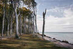spooky forest (hansekiki) Tags: mecklenburgvorpommern nienhagen wald baum bäume küste landschaften strand beach canon 5dmarkiii balticsea ostsee