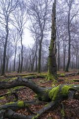 20181201_katzenkopf_0333 (doerrebachtaler) Tags: katzenkopf soonwald naturreservat buche buchenwald baumpilz nebel hunsrück seibersbach schanzerkopf hochsteinchen