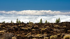 Clouds and Pinetrees / Nubes y Pinos (López Pablo) Tags: cloud pinetree green white sky blue lava red bush teide national park tenerife canary island spain nature nikon d7200
