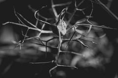 Sleeping flowers. 💚  #roots #severaldefinitions #bittersweet #ethereal_moods #loveinamist #fingerprintofGod #mextures #plantsinfocus #macro_drama #flowers #art #filthyflora #rsa_mextures #flowersofinstagram #fleur #botanical #macro_vision #mac (jophipps1) Tags: noiretblanc filthyflora loveinamist macrobrilliance mextures flowersofinstagram botanical blackandwhite severaldefinitions etherealmoods rsamextures fiftyshadesofnature bittersweet flowers art macrodrama amateursbnw bnw roots macrovision bokehbliss fingerprintofgod flickr plantsinfocus fleur naturelover bnwofourworld macrodreams