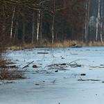 Frozen landscape thumbnail