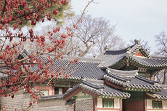 Changgyeonggung Palace. Seoul. South Korea (RikkiBoom) Tags: changgyeonggung palace travel asia aasia architecture outdoor seoul korea tree berry nature roofs unesco