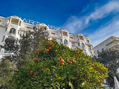 Hôtel Martinez -  Cannes - Côte d'Azur France -IMG_20190113_100644 (jmlpyt) Tags: cannes côtedazur croisette cotedazurnow cotedazurfrance esterel paca hotel palace travel luxury vacation hollidays ville martinez hôtel lacroisette festival people agrume orange jardin sunset city color image water summer sea outdoors blue beach france provencealpescote dazur french riviera photography alpesmaritimes europe cityscape extérieur coucher de soleil ciel nuage