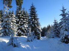 Schnee zu hauf (germancute) Tags: outdoor nature winter wald thuringia thüringen landscape landschaft