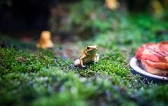 箭毒蛙 (CasaDeAM) Tags: frag zoo taipei taiwan