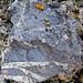 Fossil burrows in mudshale (Sunbury Shale, Lower Mississippian; Tener Mountain roadcut, southern Ohio, USA) 2
