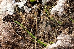 NEX_0277 (valerie something or other) Tags: carolina raleigh arboretum winter