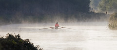 The rower - Riverside Valley Park, Exeter, Devon - Sept 2018 (Dis da fi we) Tags: rower riverside valley park exeter devon mist morning dawn red woman oars oar hat ponytail skiff tree water boat cap