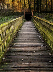 Little bridge (JLM62380) Tags: little bridge bruay hautsdefrance wood bois feuilles leaves forêt