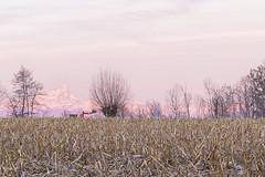 (claudio g) Tags: mondovì cuneo piemonte monviso redipietra pianura padana campo grano alba sunrise sun
