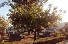 Terraza de hotel (hotelbenarraba) Tags: hotel hoteles hostal restaurante restaurant piscina jardin benarraba serraniaderonda costadelsol costadelgolf marbella estepona malaga andalucia españa spain cadiz