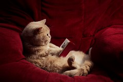 Netflix (Ángela Burón) Tags: toffe cat gatico gato leyendo reading book ñi