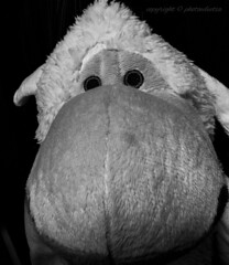 Intent Sheep (photoeclectia1) Tags: sheep blackandwhite toy closeup