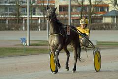 Berlin Trabrennbahn Mariendorf 27.1.2019 (rieblinga) Tags: berlin tempelhof mariendorf trabrennbahn renntag 2712019 3 rennen sport pferde wetten