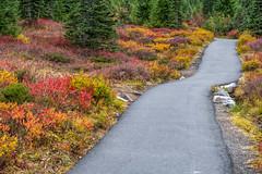 Mount Rainier Skyline Trail (jeff's pixels) Tags: mountrainiernationalpark mountrainier skyline trail hiking autumn color fall nature pnw washington nationalpark
