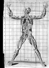 This image is taken from Exposition anatomique de la structure du corps humain. Par M. Winslow... Nouvelle édition faite sur un exemplaire corrigé et augmenté par l'Auteur, à laquelle on a joint de nouvelles figures e (Medical Heritage Library, Inc.) Tags: winslow jacquesbenigne 16691760 prã©curseurs des neurosciences anatomie bibliothequeinteruniversitairedesante medicalheritagelibrary additionalcollections date1776 idbiusante83405x02