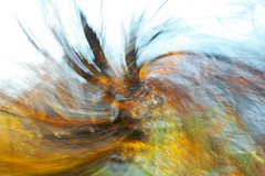 Painting With Light ([JBR]) Tags: automne autumn otono tree arbre arbol forest foret couleur color colores