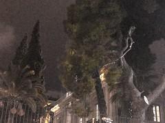 Mystique pine_IMG_7338b (AchillWandering) Tags: greece athens syntagma pines trees building mantion night luminous light art artistic outdoor urban q003 count003 streeturban qc003 care003