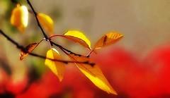 C'est la fin de l'automne ! (mamietherese1) Tags: ngc world100f earthmarvels50earthfaves