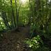 cusworth hall woods