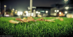 Fallen leafs (natecastleton@ymail.com) Tags: november outside cold winter night bradford city park citypark nikon leafs