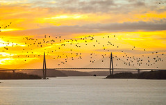 Birds flying above the bridge (jurgita_zuk) Tags: architecture sunset sunsetcolours birds shadows colours sky skyporn bridge sweden sverige udevalla