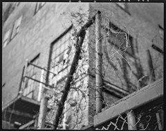 industrial stairway, tangled vines, warehouse II, River District, Asheville, NC, Koni Omega Rapid 100, Super Omegon 80mm f-3.5, Kodak TMAX 400, Ilford Ilfosol 3 developer, 11.2.18 (steve aimone) Tags: stairway industrial vines tangled warehouse lookingup riverdistrict asheville northcarolina koniomega koniomegarapid100 6x7 rangefinder kodaktmax400 ilfordilfosol3developer 120 120film film mediumformat monochrome monochromatic blackandwhite superomegon90mmf35