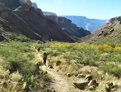 Heading for the narrow Bright Angel Canyon (knutsonrick) Tags: grandcanyon northkaibabtrail grandcanyonnationalpark hiking backpacking arizona brightangelcreek thebox phantomranch hikers brightangelcanyon