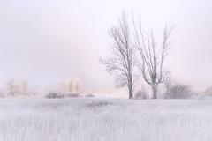 Hielo, sol y niebla... (GLAS-8) Tags: niebla hielo helada arboles nubes sol frio diciembre campo glas8 mcarmenverde