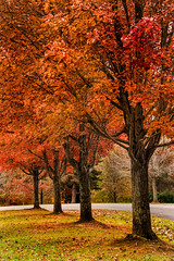 Four Fall Trees 3-0 F LR 11-8-18 J028 (sunspotimages) Tags: fall autumn tree trees forest falltree falltrees fallforest autumntree autumntrees autumnforest orange orangetree orangetrees orangeforest nature landscape falllandscape autumnlandscape