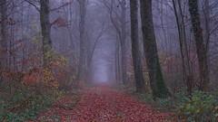 Moulainville - Dec 18 - 16 (sebwagner837_55) Tags: moulainville forêt verdun meuse lorraine grandest grand est france brume