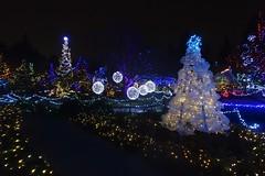 035-December 13-FOL (karendunne337) Tags: