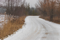 Happy New Year! (A Great Capture) Tags: newyear ontario road snowy snow kingcity kingtownship king township agreatcapture agc wwwagreatcapturecom adjm ash2276 ashleylduffus ald mobilejay jamesmitchell on canada canadian photographer northamerica fall autumn automne herbst autunno otoño 2018 landscape paisaje paysage landschaft colours colors colourful colorful eos digital dslr lens canon natur nature naturaleza natura naturephotography naturethroughthelens scenery scenic outdoor outdoors outside woods trees tree arbre forest wald árvore branch branches trail path route walkway 6d mark ii 2470mm neige schnee