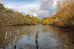 Three ducks in a row (PhredKH) Tags: canonphotography connaughtwater eppingforest essex forest fredkh photosbyphredkh phredkh splendid lake nature scencwater water scenic wood sky clouds ducks bushes 2470mm ef2470mmf4lisusm canoneos5dmarkiii naturephotography tree
