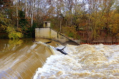 White River Overflowing Dam at Williams in Lawrence County, Indiana (11/2/2018) (danjdavis) Tags: whiteriver highwater dam williamsdam lawrencecounty indiana