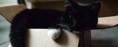 Her Favourite Box (D U B L) Tags: black white cat box paw