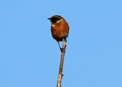 IMG_4873 (monika.carrie) Tags: monikacarrie wildlife scotland