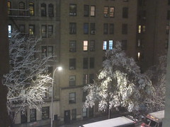 2018 November Evening Blizzard Snow Tree - Front Yard 5118 (Brechtbug) Tags: 2018 november evening blizzard snow storm front yard hells kitchen clinton near times square broadway nyc 11152018 new york city midtown manhattan snowing storms snowstorm winter weather building fog like foggy hell s nemo southern view ny1snow