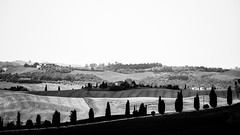 Black shadows (FrancescoPalmisano) Tags: ifttt 500px travel asciano italia italien italy siena sony a6000 toscana tuscany bw black white campagna colli colline country countryside crop field hills landscape nature outdoor spring sunset sonya6000 blackandwhite