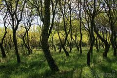 Controluce a Orunitta – Buddusò (Franco Serreli) Tags: sardinia sardegna bosco albero alberi natura paesaggio paesaggiosardo paesaggisardi verde piante pianta controluce orunitta buddusò ambientidisardegna ambiente naturaambientipaesaggi ambientinaturali boscodiorunitta montacuto
