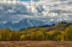 An Autumn Scene (Philip Kuntz) Tags: autumn fall fallfoliage foliage trees tetons stormy grandtetonnationalpark wyoming