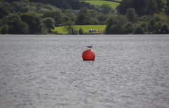 Red Bouy (martin-holden-images) Tags: adventure boats cumbria explore fells lake lakes mountains outdoors sailing sky water windermere