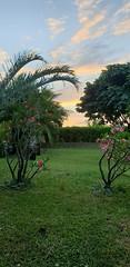 Carribean sunrise #Martinique #lefrancois #sunrise #earlymorning #carribeancolours #carribeansunrise #anewday #mondayfeelings #travel #home #beautyofnature #carribeanbeauty #photography photo credit Isabella Cabre (isabella.cabre) Tags: sunrise anewday carribeansunrise earlymorning carribeanbeauty home lefrancois beautyofnature mondayfeelings martinique travel photography carribeancolours