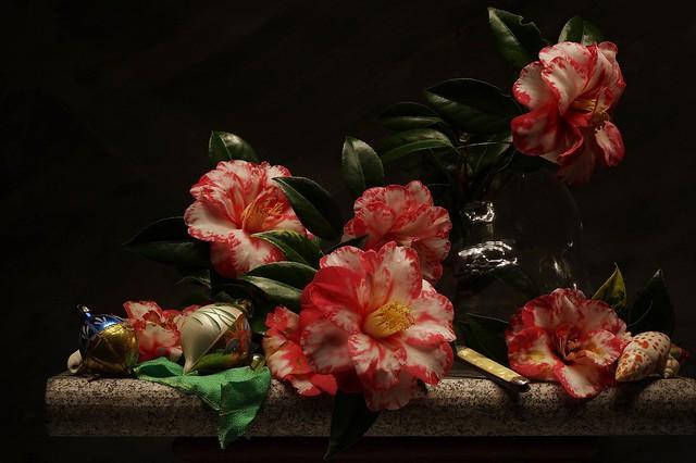Обои цветы, натюрморт, камелии картинки на рабочий стол, раздел цветы - скачать