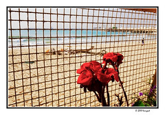 red kana, behind fence (harrypwt) Tags: harrypwt africa afrika fujix70 x70 borders framed boat wooden red flower beach cotounou benin sea sand people lines fence