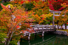 World of Colors (BeNowMeHere) Tags: ifttt 500px trip autumn2015 benowmehere colour fall fallcolours japan kyoto landscape nature temple worldofcolors autumn color colorful colourful garden japanese serenity travel