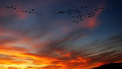 Poetry (Rand Luv'n Life) Tags: odc our daily challenge shadows moods peaceful radiant sunset blackbirds flight clouds sky outdoor poetry beatles song lyrics text