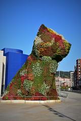 Puppy (Bilbao, País Vasco, España, 27-9-2018) (Juanje Orío) Tags: 2018 bilbao vizcaya provinciadevizcaya paísvasco euskadi españa espagne espanha espanya spain europa europe europeanunion unióneuropea escultura sculpture arte art flor flower jeffkoons
