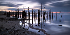 300 (Andrew Hocking Photography) Tags: 300 colliford lake reservoir deadtrees sunrise spooky eerie landscape water longexposure leefilters bluehour cornwall england winter morning death trees gloom dawn