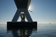 Zeelandbrugsegeln (lotharmeyer) Tags: zeelandbrücke oosterschelde nikon lotharmeyer water sea natur wasser nature zierikzee holland niederlande blue spiegelung gegenlicht reflexe tiere möwe sport segeln